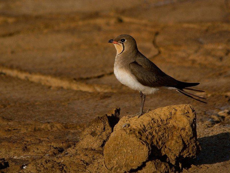 birdwatching tour - wild donana
