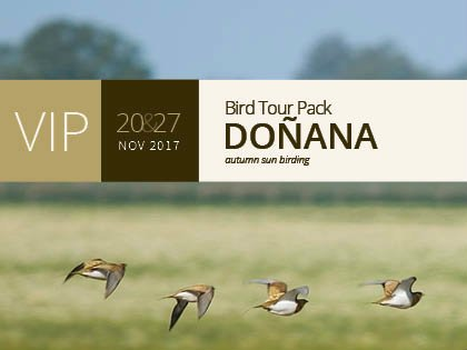 VIP Bird Tour Pack Doñana 20&27 Nov 2017